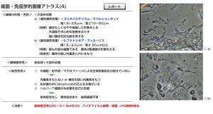 スクリーンショット 2014-05-13 13.56.28